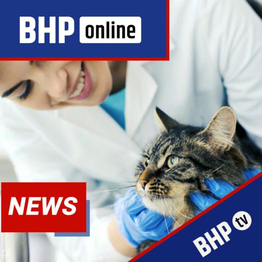 Kurs BHP dla asystenta weterynarza – nowe wytyczne 2020/2021